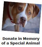 Donate in Memory of An Animal